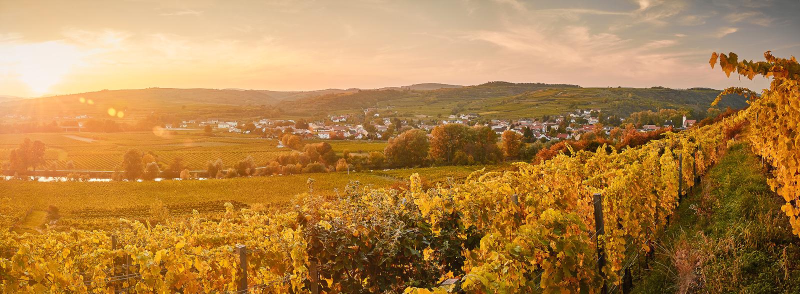 Ohne Übertreibung darf behauptet werden, dass im Weinbaugebiet rund um Langenlois, Zöbing und Schönberg Weißweine gekeltert werden, die zu den besten der Welt gehören. (Foto: Michael Liebert)